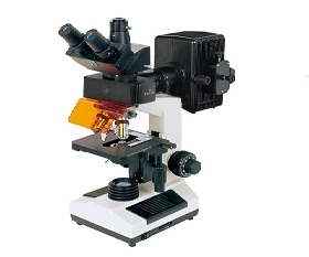 BS-2030FT Fluorescent Biological Microscope