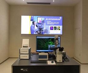 BCF295Laser Scanning Confocal Microscopy
